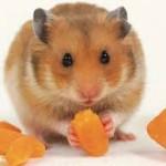 chuột 2