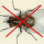 diệt ruồi