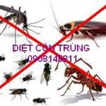 diet côn trung
