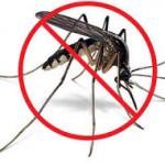Dịch Vụ Diệt Muỗi Tại Nhà  Quận 6