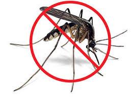 Dịch Vụ Diệt Muỗi Tại Quận 5