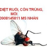 ruồi min họa