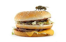 Ruồi Thích đậu vào thức ăn, gây nhiễm khuẩn