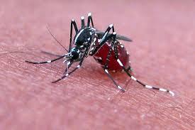 Diệt Muỗi Quận 10