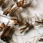 Diệt Muỗi Quận 8