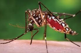 Dịch Vụ Diệt Muỗi Tại Quận Bình Thạnh