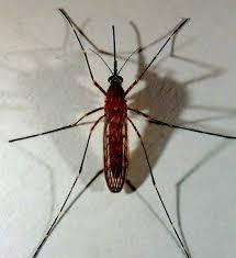 Dịch Vụ Diệt Muỗi Tại Tỉnh Bình Dương