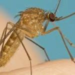 Diệt Muỗi Tại Nhà Bình Dương