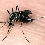 Diệt Muỗi Tại Nhà Quận 12