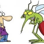 Diệt Muỗi Tại  Tp Biên Hòa