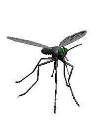 Nhận Diệt Muỗi Tại Nhà Đắk Lắk