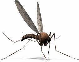 Nhận Diệt Muỗi Tại Quận Bình Tân