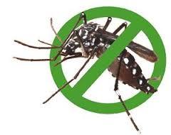 Hình Minh Họa Con Muỗi