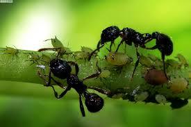 Nơi bán thuốc diệt kiến