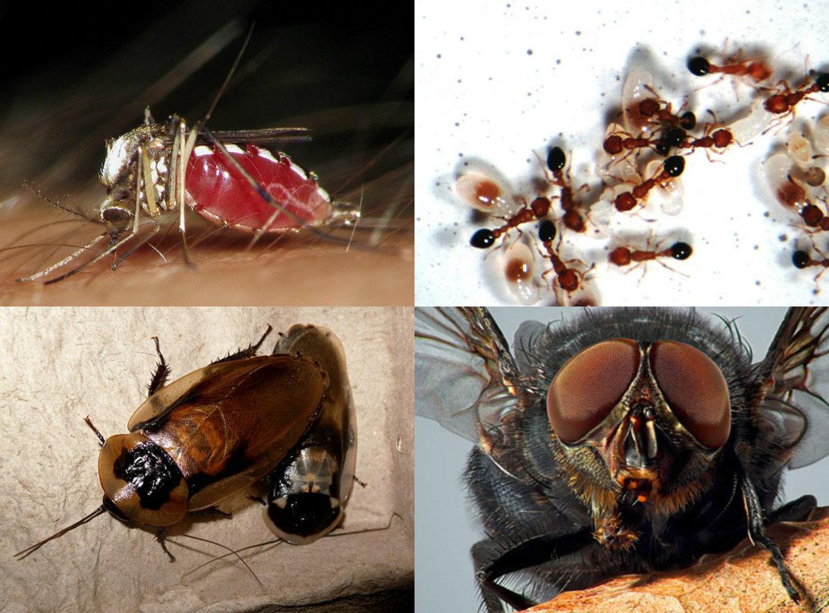 nhận bán thuốc côn trùng tại nhà trong tphcm, tại quận tân bình